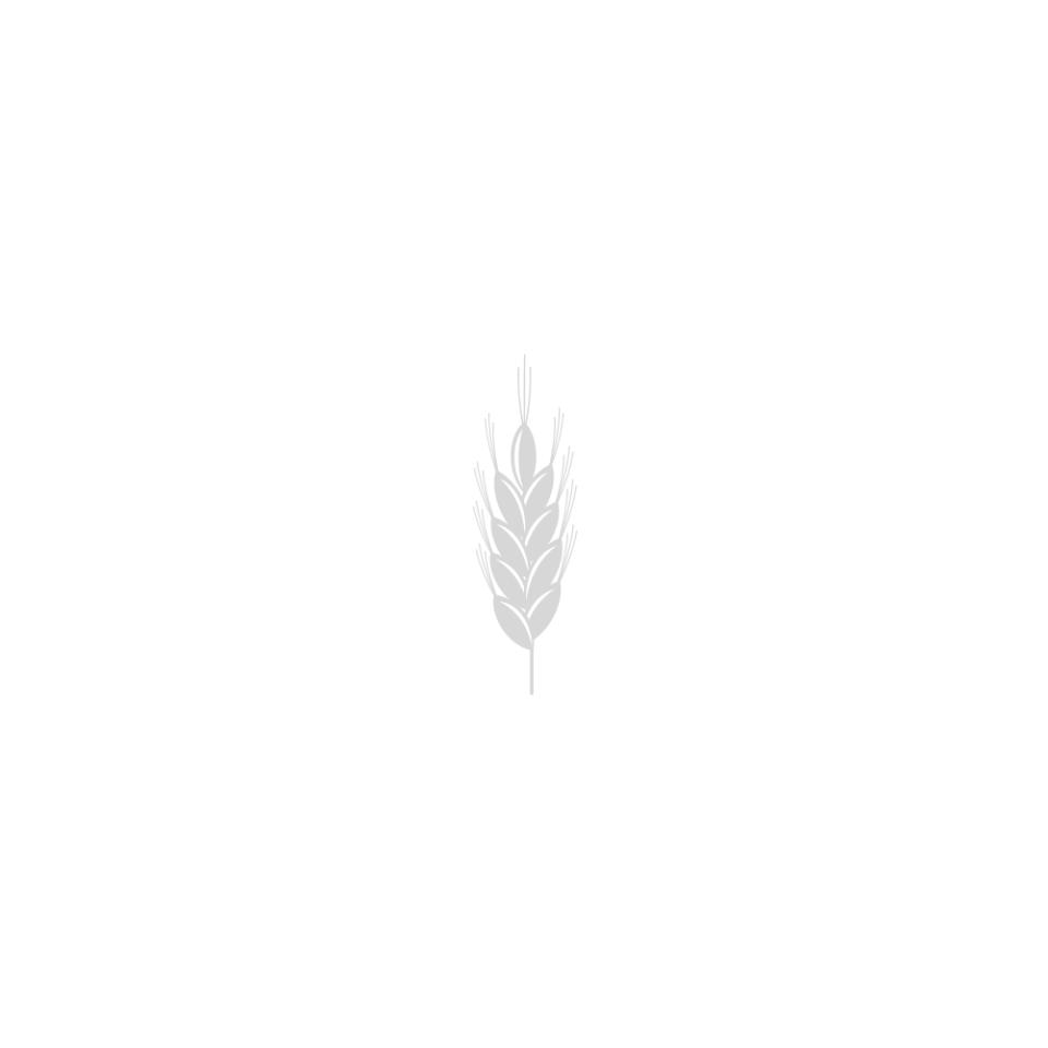 EdiAgro Cereal